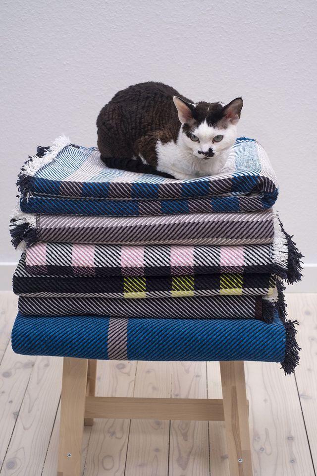 pledy bawełniane, kot