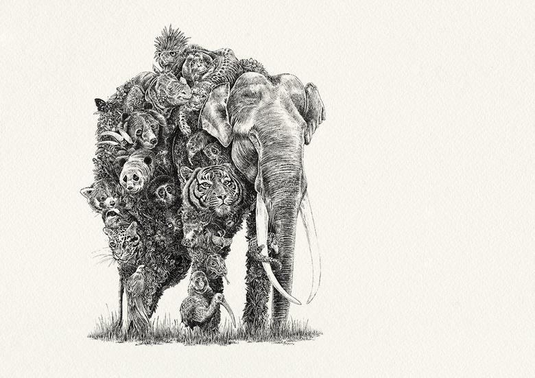 rysunek - słoń