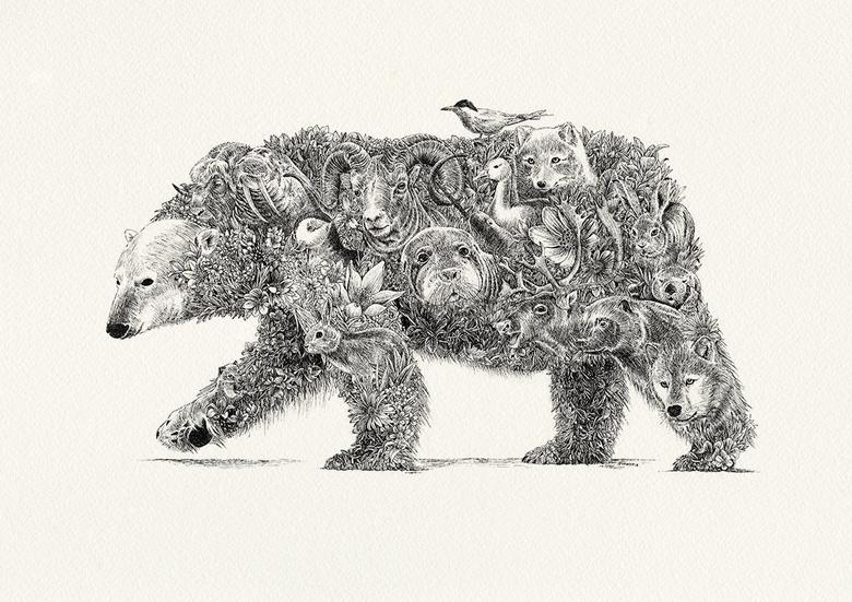 rysunek - niedźwiedź