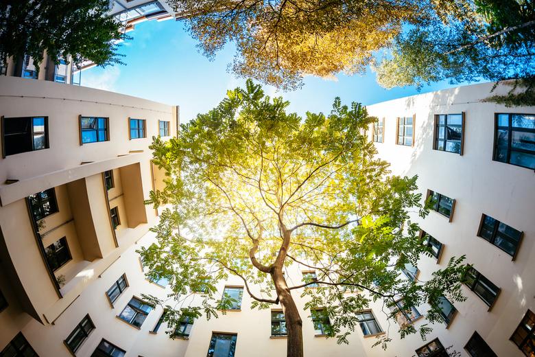 Drzewa w miastach to inwestycja w zdrowie