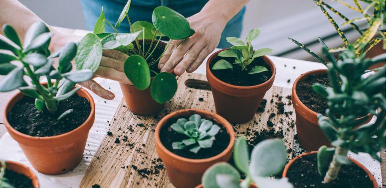 Zdrowe-kwiaty-doniczkowe-w-domu