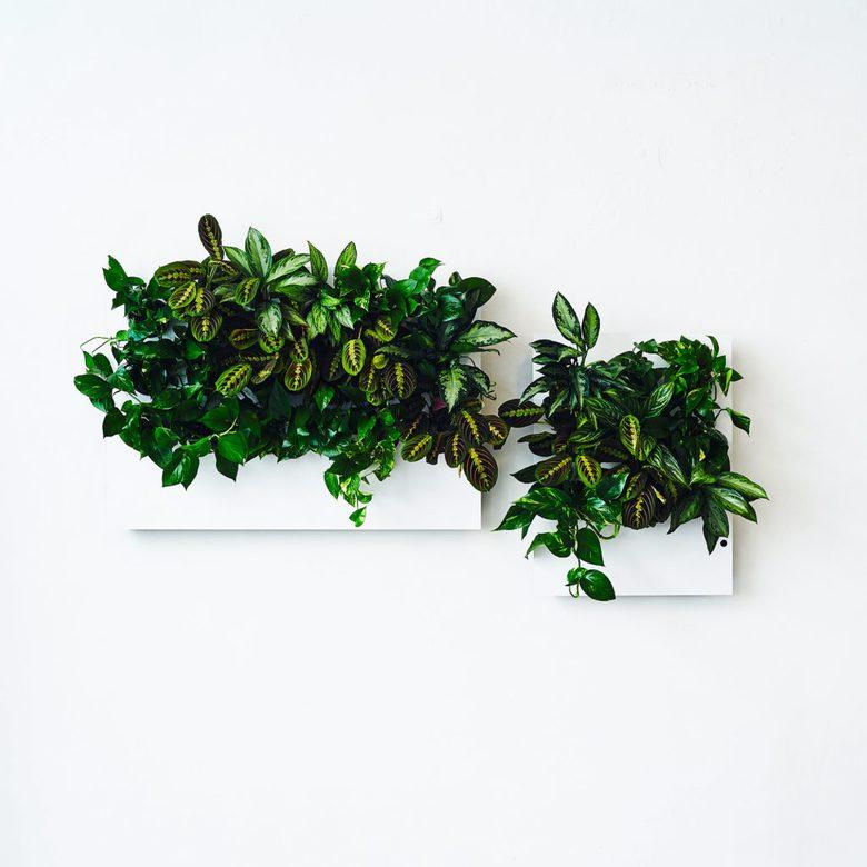 Florama Florabo, zielona sciana w domu