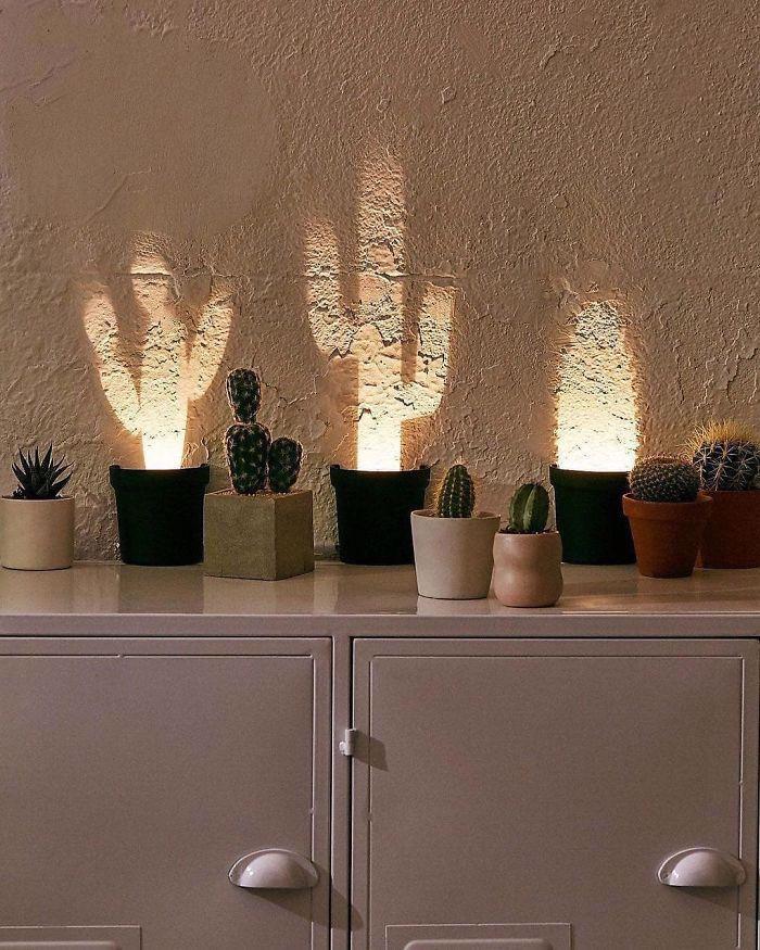 świecące kaktusy