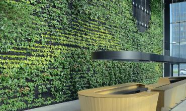 Największa zielona ściana w polskim biurowcu